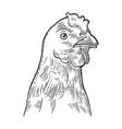 Head Chicken Vintage engraving vector image