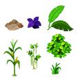 various plants cartoon set for you design vector image