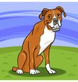 boxer purebred dog cartoon vector image