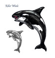 killer whale or orca sea animal isolated sketch vector image vector image