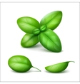 Green Fresh Basil Leaves Close up on Background vector image