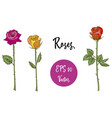 set of roses isolated vector image