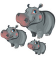 cartoon hippo on white background animals vector image