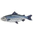 image of atlantic salmon red fish realistic vector image