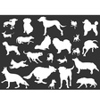 white dogs silhouettes set vector image