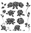 roses isolated on white background vector image