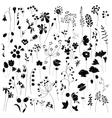 Collection of stylized herbs and plants Black vector image