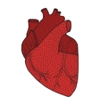 Human heart hand drawn isolated on a white vector image