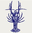 Crayfish sketch vector image