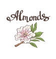 Almond flower hand drawn vector image
