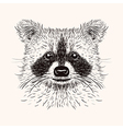 Sketch liner raccoon Hand drawn in doodle style vector image