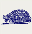 Ear tortoise vector image vector image