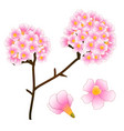 pink trumpet flower tree isolated on white vector image