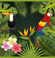 tropical birds design vector image