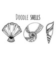 set of black and white doodle of seashell for your vector image
