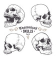 anatomical skulls set vector image