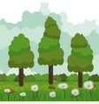 colorful background of field with daisy flowers vector image