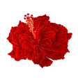 corrugated red hibiscus simple tropical flower vector image