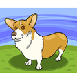 pembroke welsh corgi dog cartoon vector image