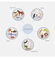 vertebrates classification infographics vector image