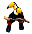 Toco toucans sitting on the branch vector image