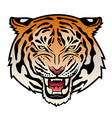 Tribal tiger color VS vector image