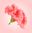 Pink hibiscus tropical flowers blossom simple vector image