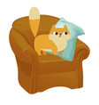 ginger cat funny plump cat in the big armchair vector image