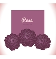 Purple dark rose background vector image