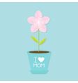 Sakura flower pot Japan blooming cherry blossom vector image