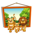 Photo frame of lion family vector image