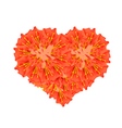 Scarlet Flame Bean Flowers in A Heart Shape vector image