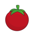 tomato vegetable food vector image