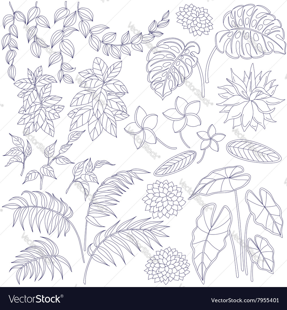 Tropic outline set vector