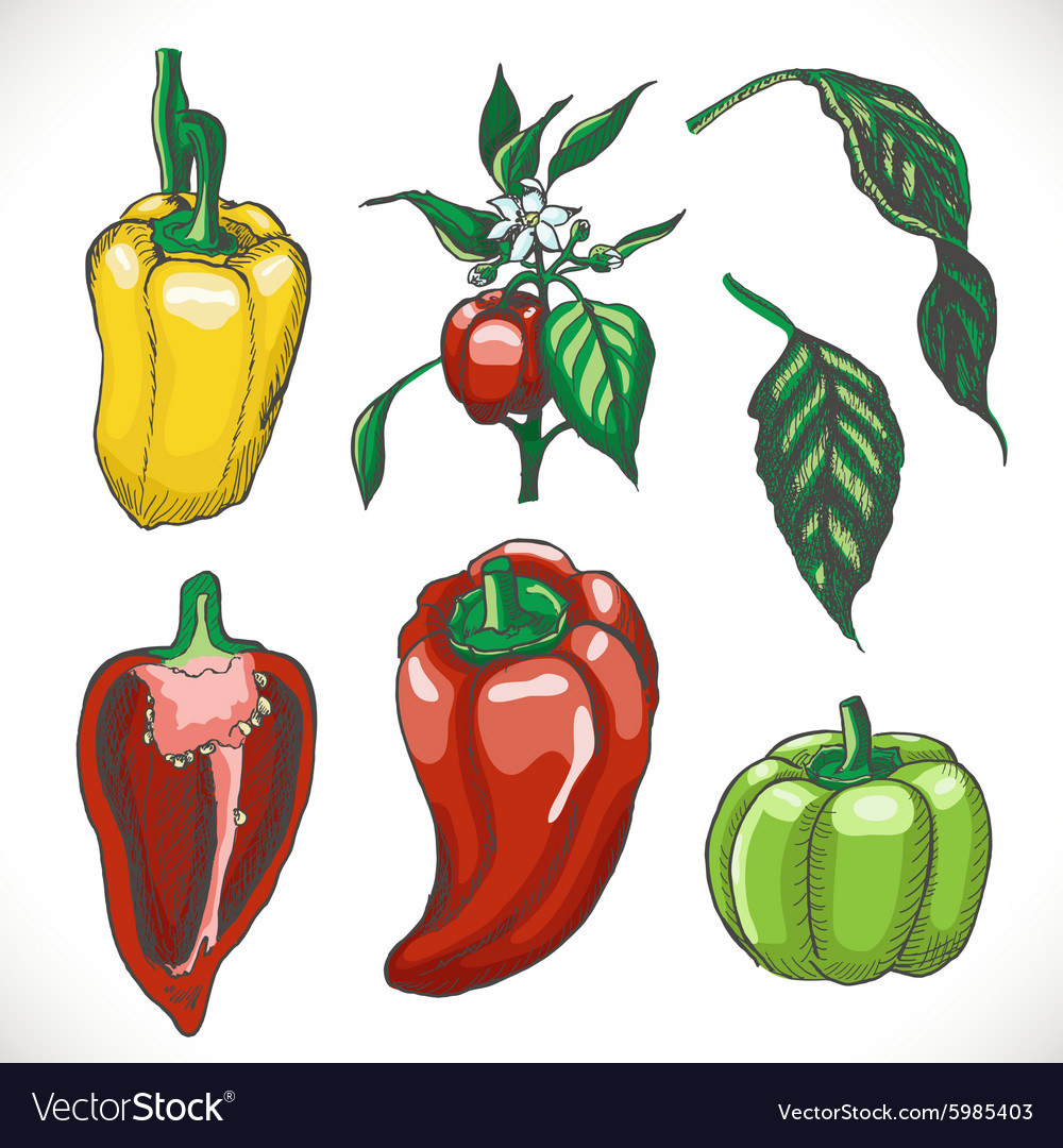 Set of colored bell peppers vector