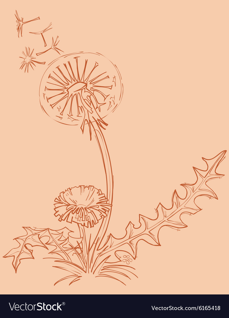 Dandelion outline drawing vector