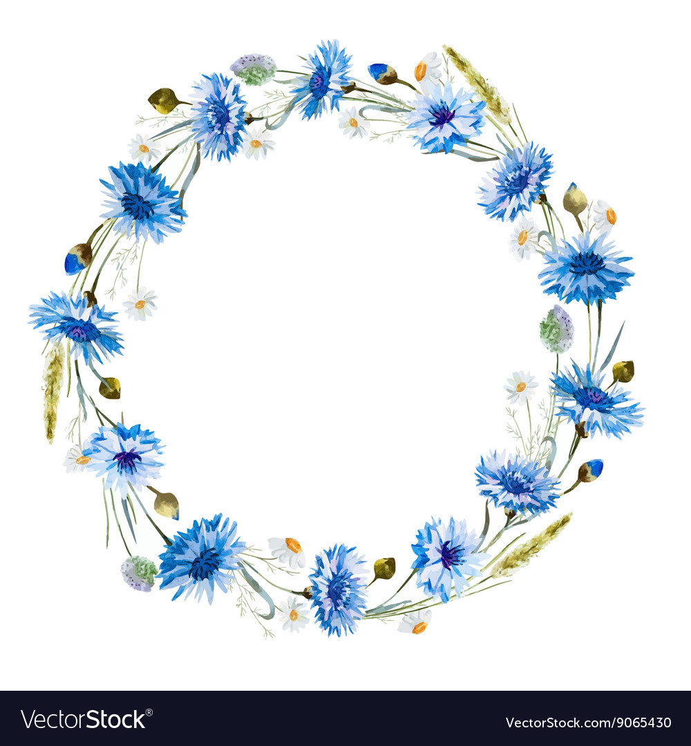 Cornflower watercolor wreath vector