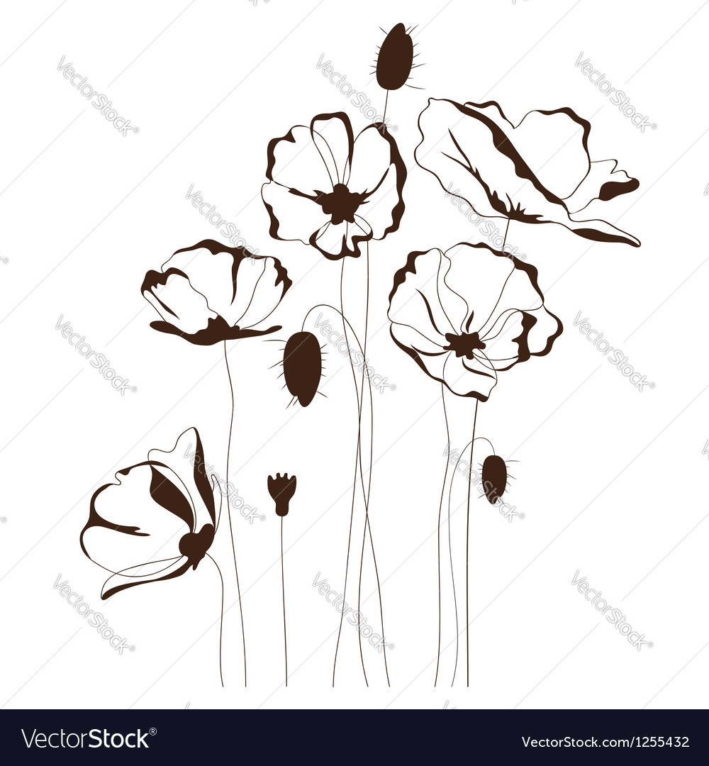 Poppy design vector