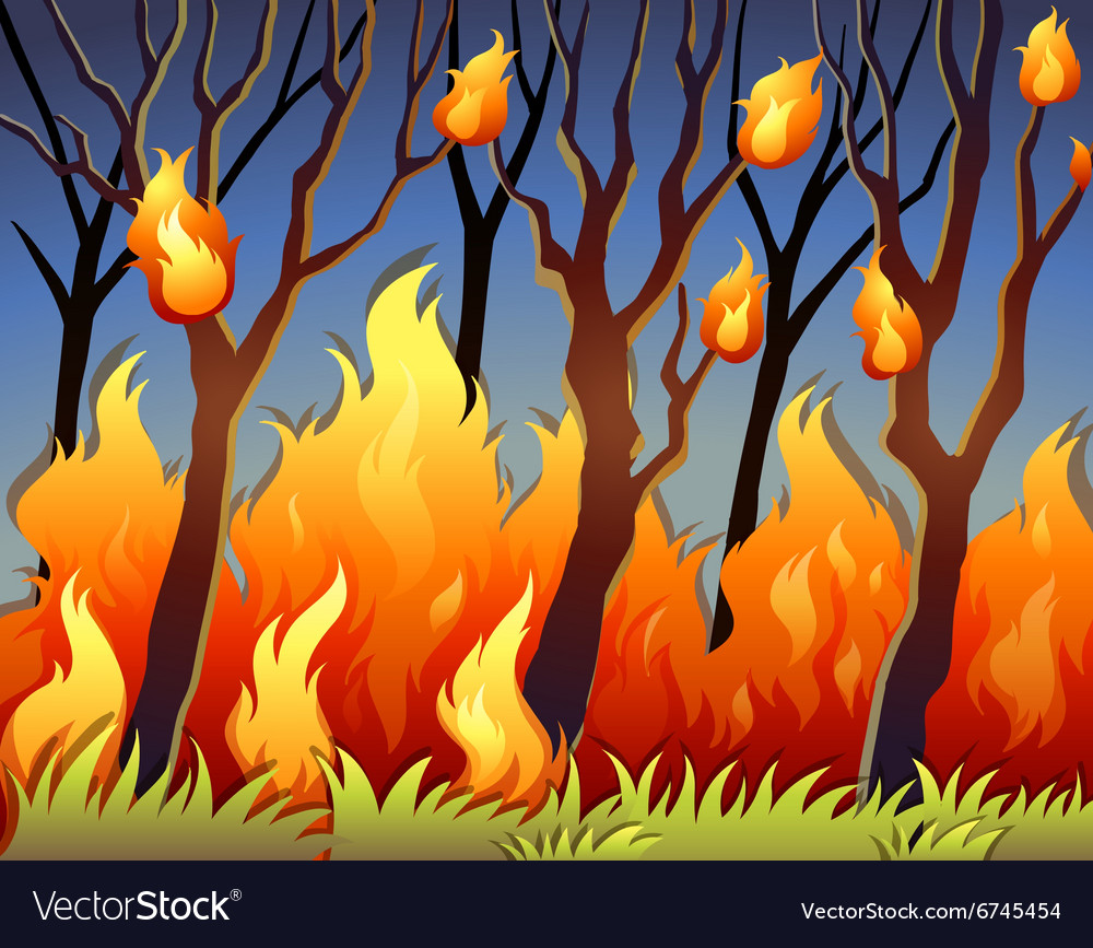 Trees in forest on fire vector