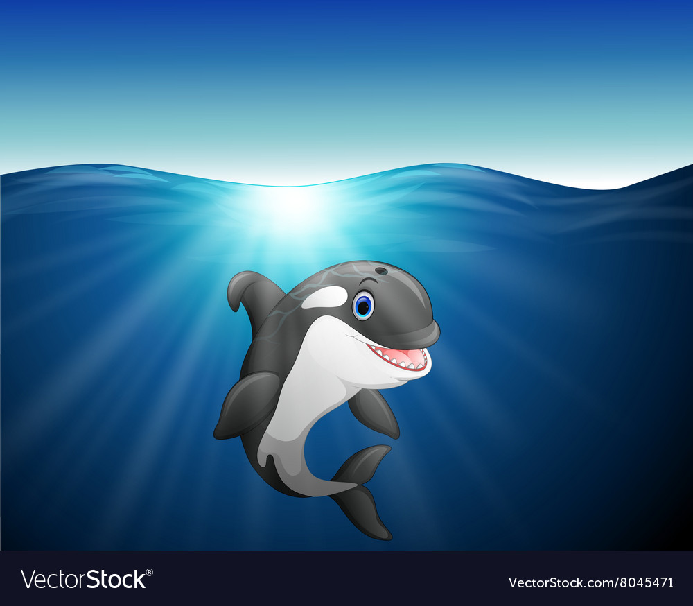 Killer whale cartoon on the sea vector