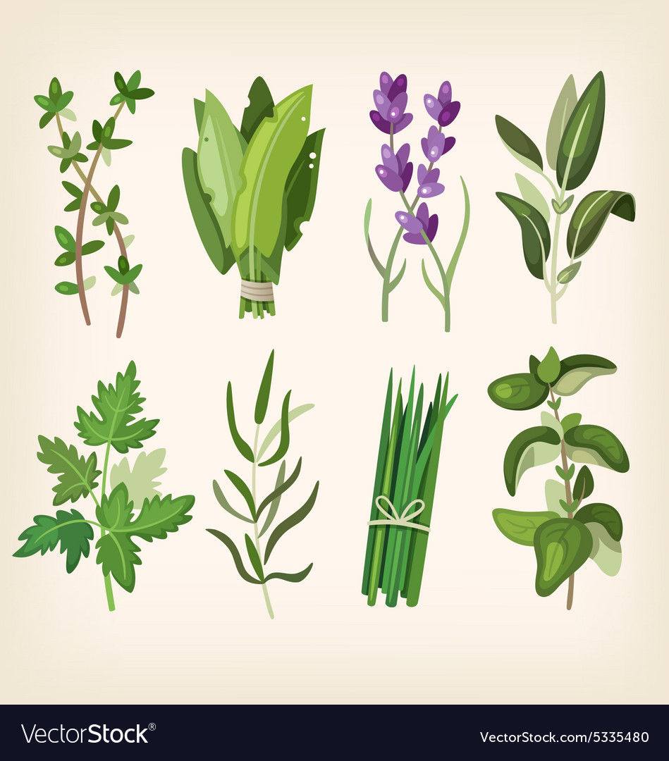 Seasoning and dressing herbs vector