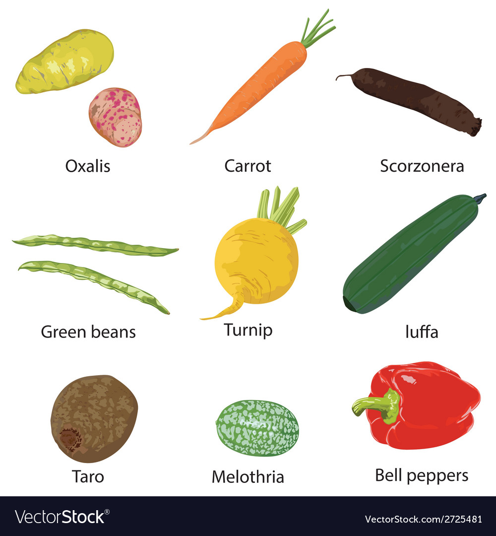 Vegetables on a white background vector
