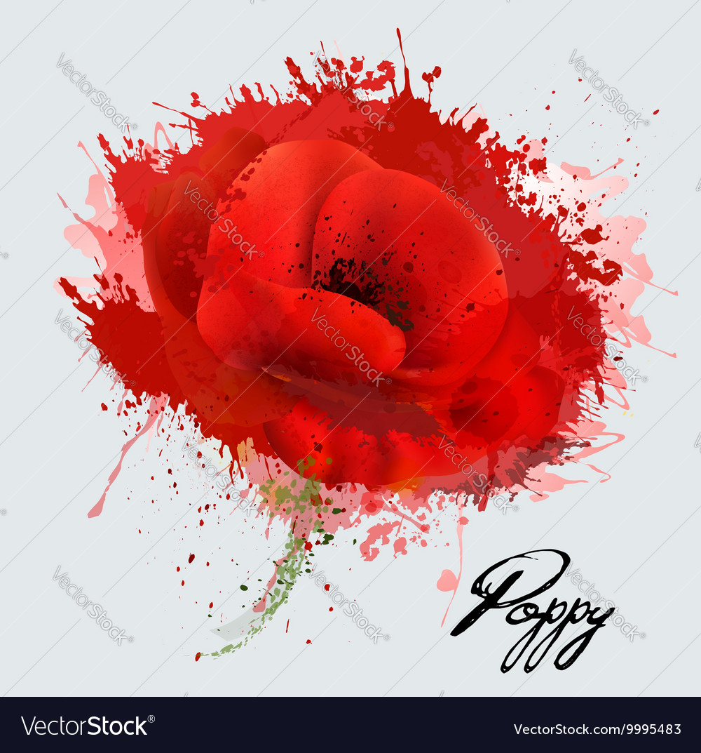 Abstract watercolor poppy flower vector