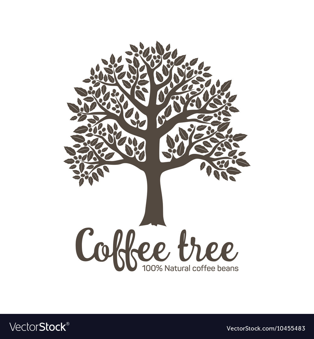 Hand drawn graphic tree with coffee beans vector