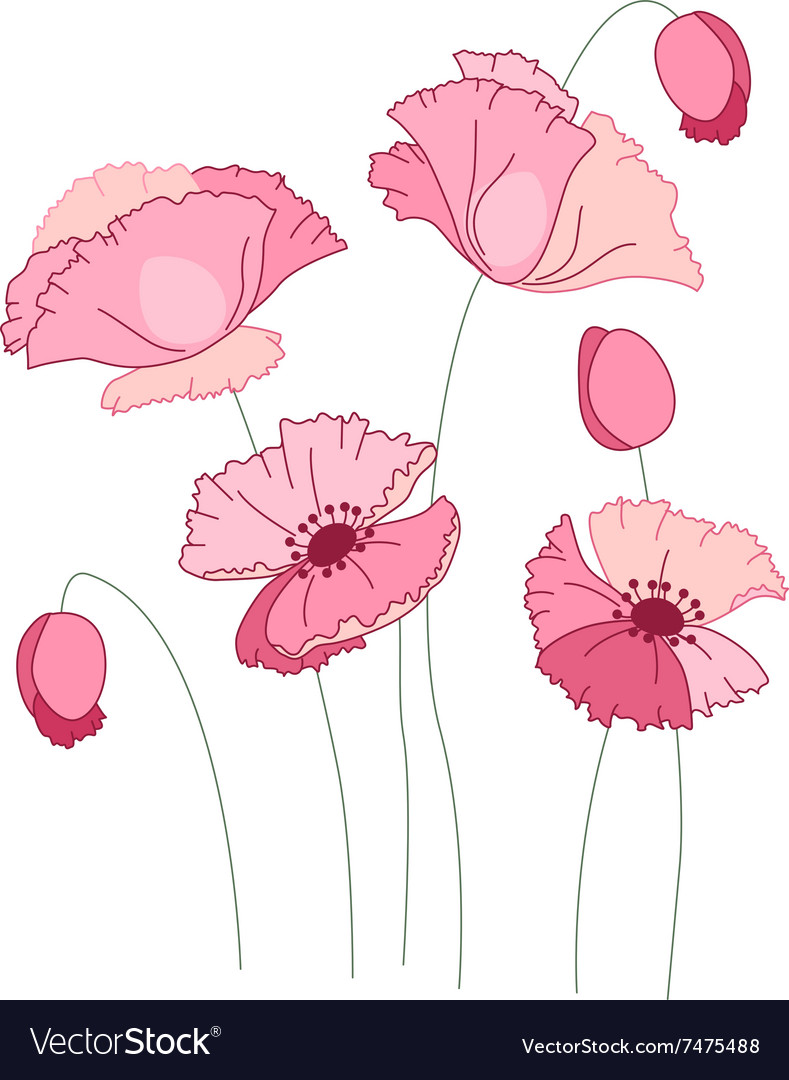 Stylized pink poppy isolated on white background vector