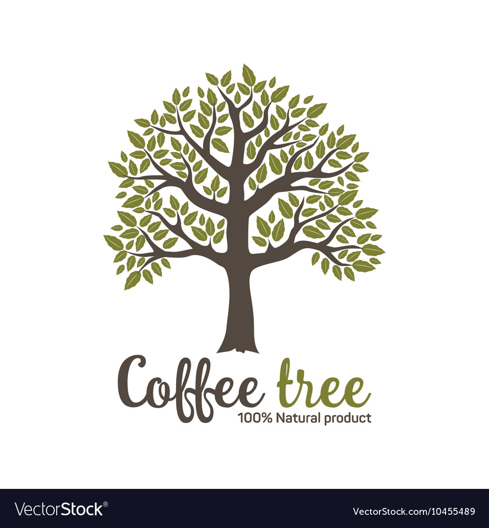 Hand drawn graphic coffee tree vector