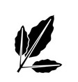 branch coffee leaf vector image
