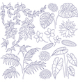 tropic outline set vector image vector image