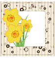 bouquet of daffodils greeting card vector image