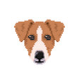 jack russell dog head in pixel art style vector image